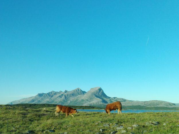 Hver dag fikk vi flotte utsikter imens vi kjørte