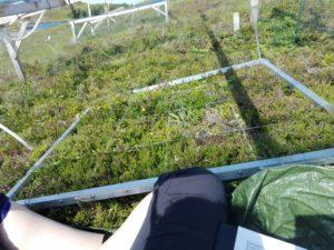 Vegetasjonsanalyse av vegetasjonsplottet på Skotsvær